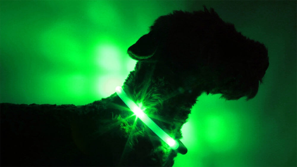 LED light collar LEUCHTIE in the extremely bright version green in transparent tube