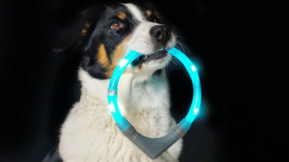 LED light collar LEUCHTIE is retrieved by a dog