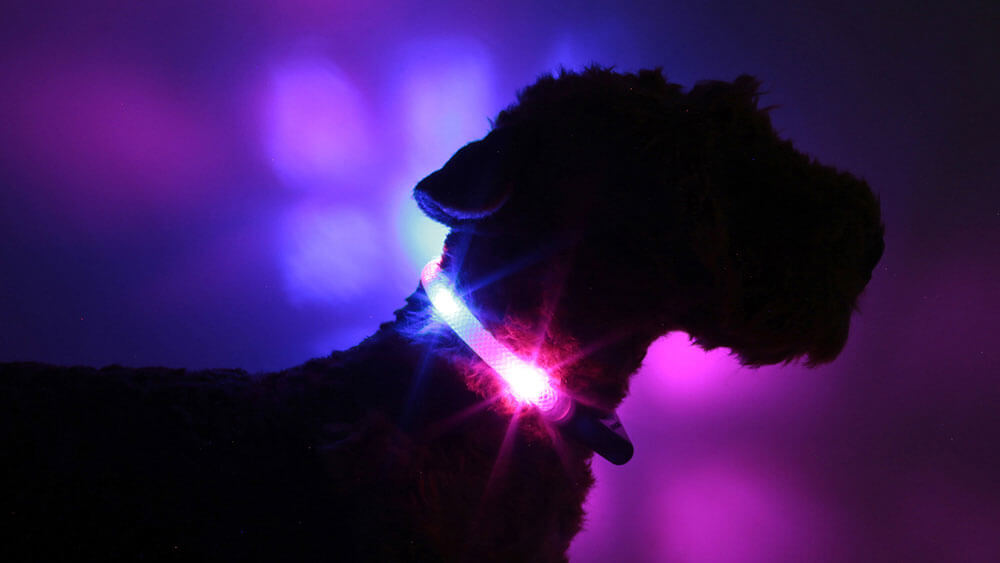 LED light collar LEUCHTIE in the colour combination hotpink-blue