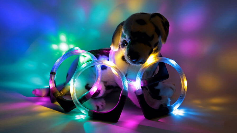 The LED light collar LEUCHTIE is also available in many two-colour variants
