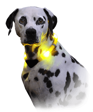 Dalmatian with LED collar LEUCHTIE Premium